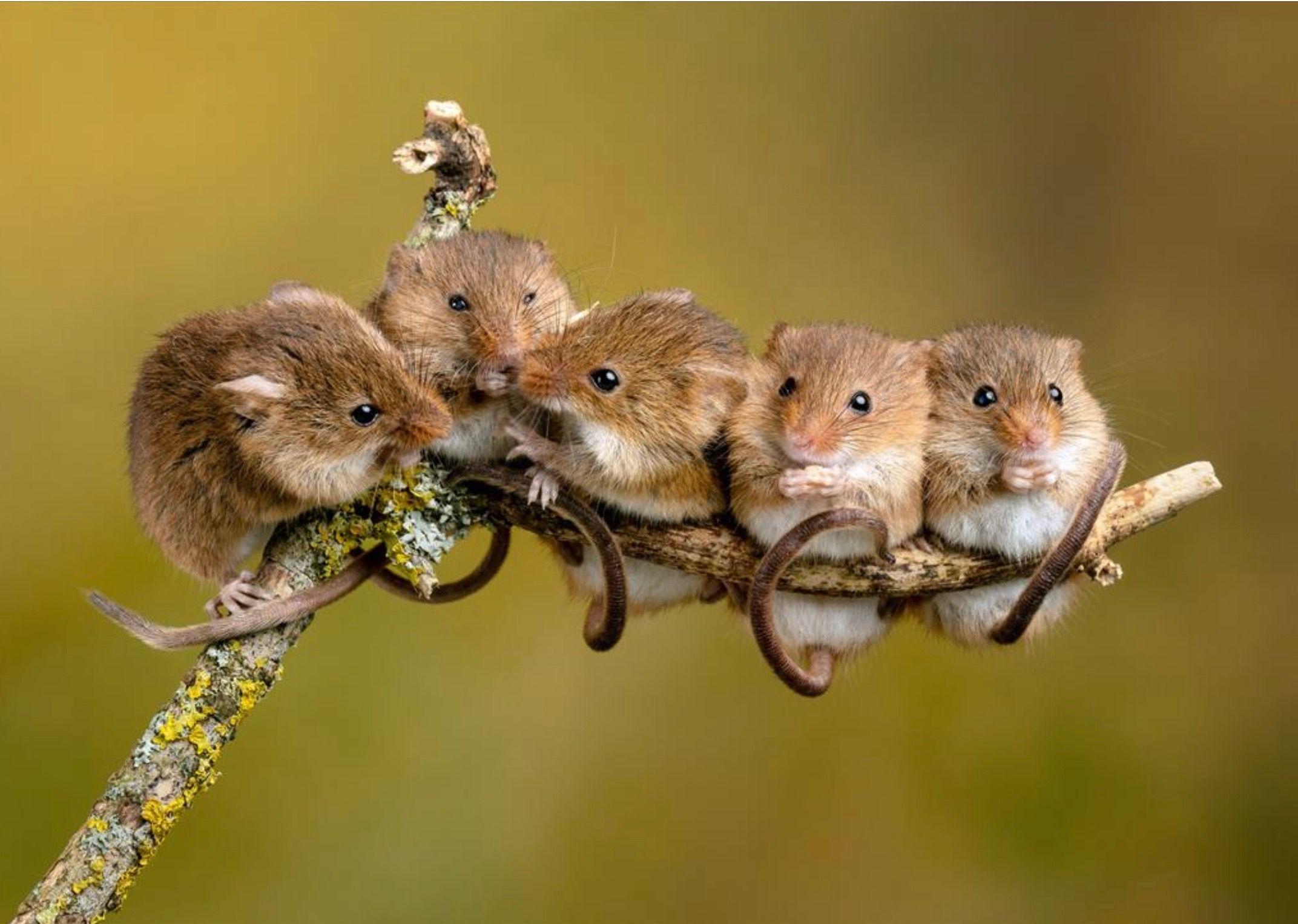 смешные картинки с мышками ночью заполнили