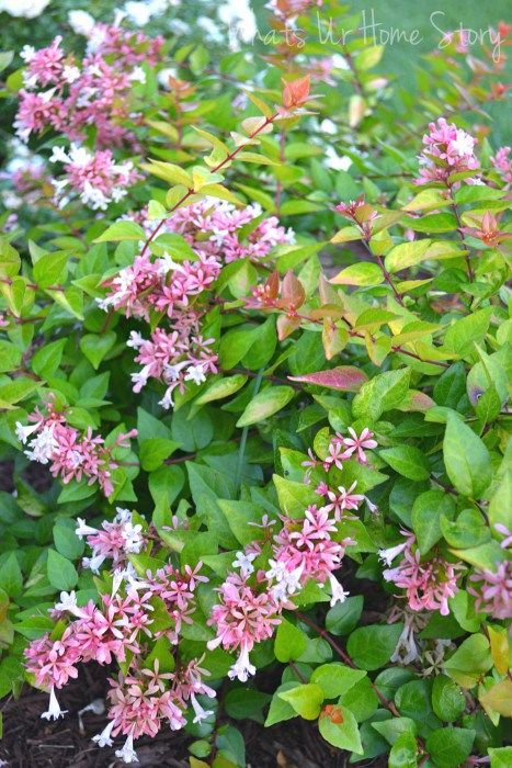 Garden Talk 6 Sun Loving Plants Landscaping Sun Loving Plants