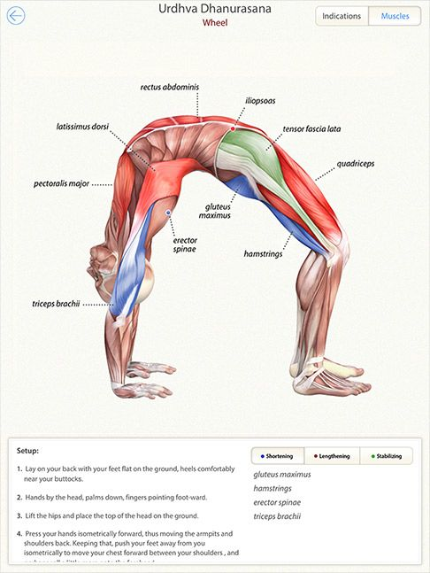 3D Yoga Anatomy App! Never seen anything like this for yoga.. This ...