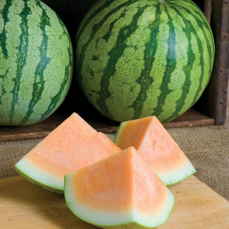 Orange Crisp (F1) Watermelon Seed   Watermelon, Watermelon ...