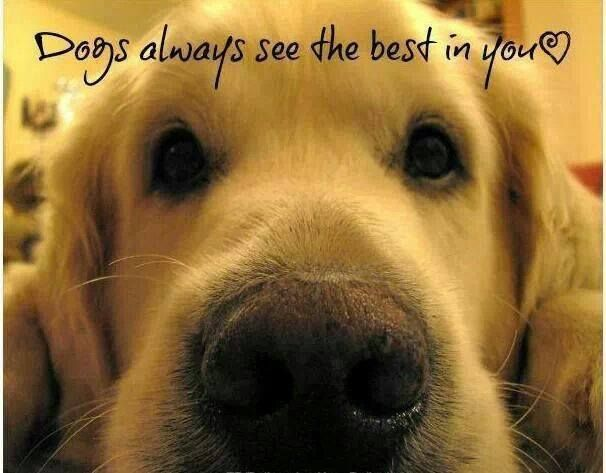 Dogs Always See The Best In You