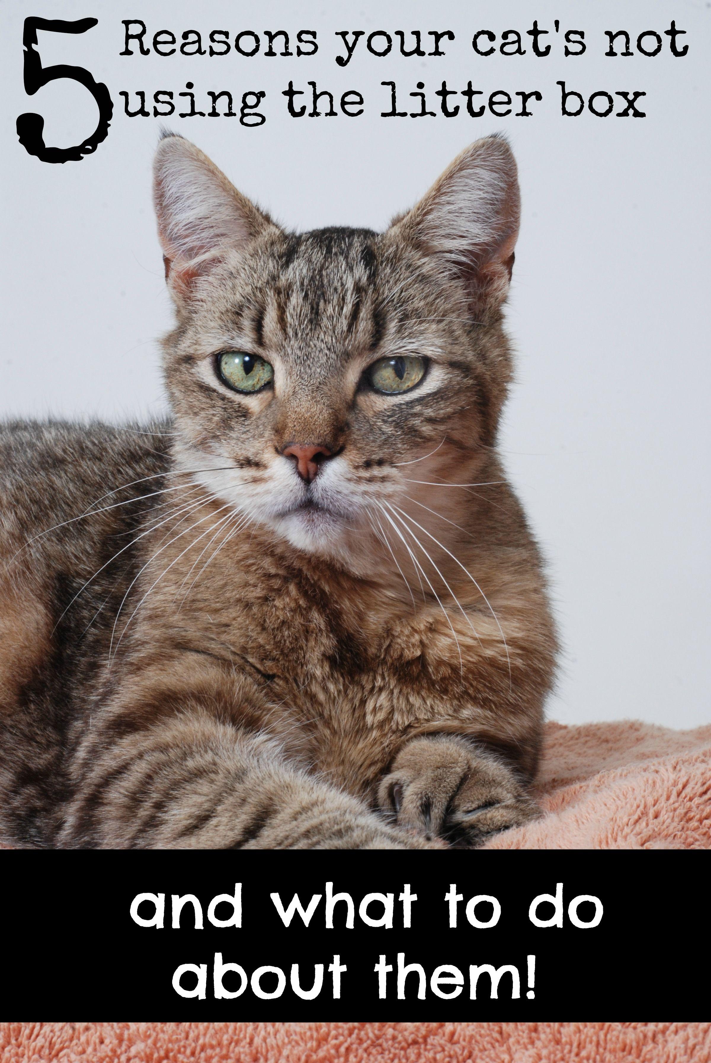 Kitty not peeing