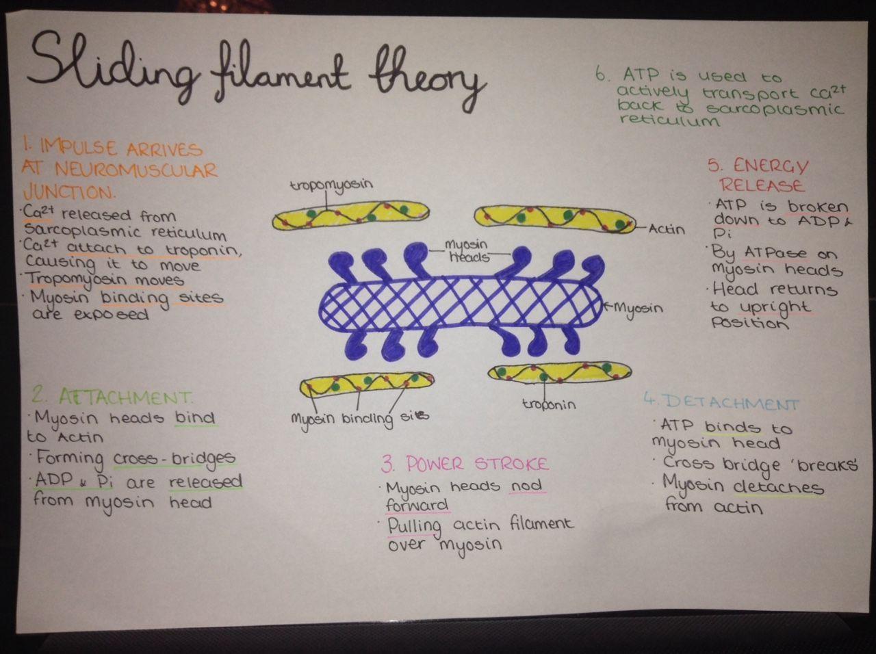 sliding fillament theory
