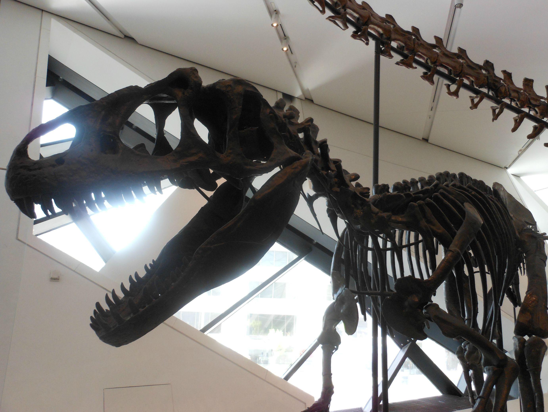 Dino Skellies Prehistoric Dinosaurs Dinos Prehistoric Creatures