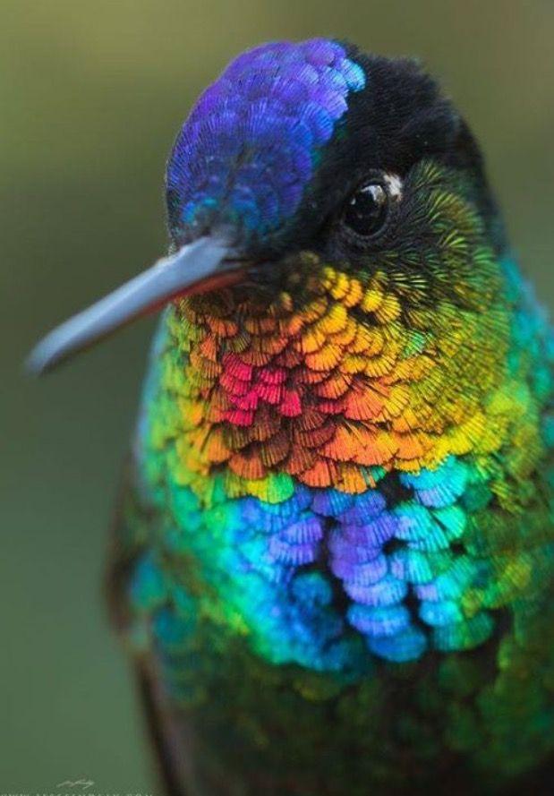 Seriously Though Hummingbirds Birds Beautiful Birds Animals Wild