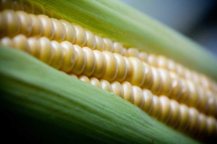 Maïs koken: tips en variaties – GroenteGroente.nl