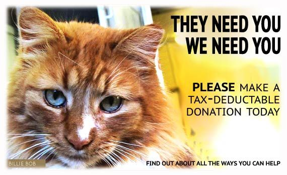 Rocky Mountain Feline Rescue is a cage-free, no-kill cat shelter.  RMFR is in danger of shutting its doors due to lack of funding.  YOU can make a difference by donating today.