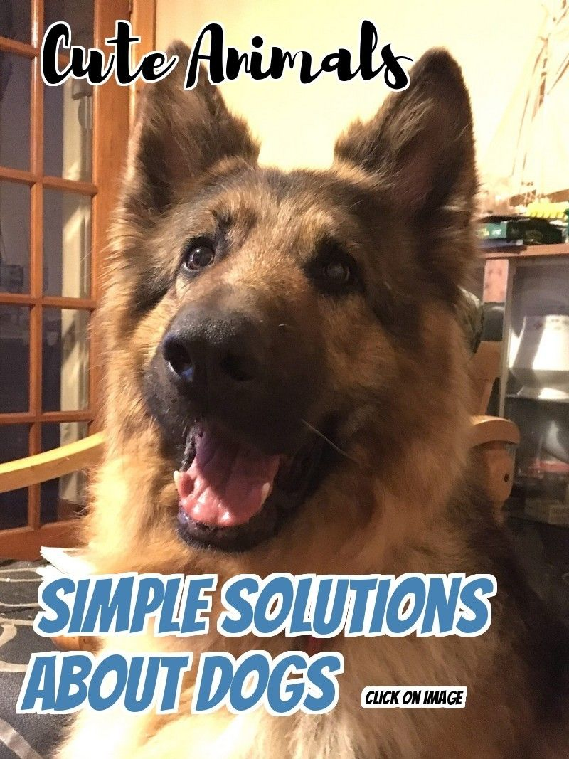 Fix Your Problems Related To Dogs Thanks To This Article Natural Dog Care Pet Care Dogs Cheap Pet Insurance