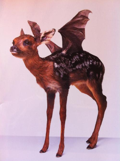 #bat #fawn #deer