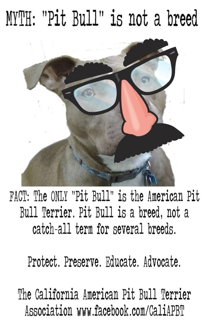 Pin On Pit Bull Mom
