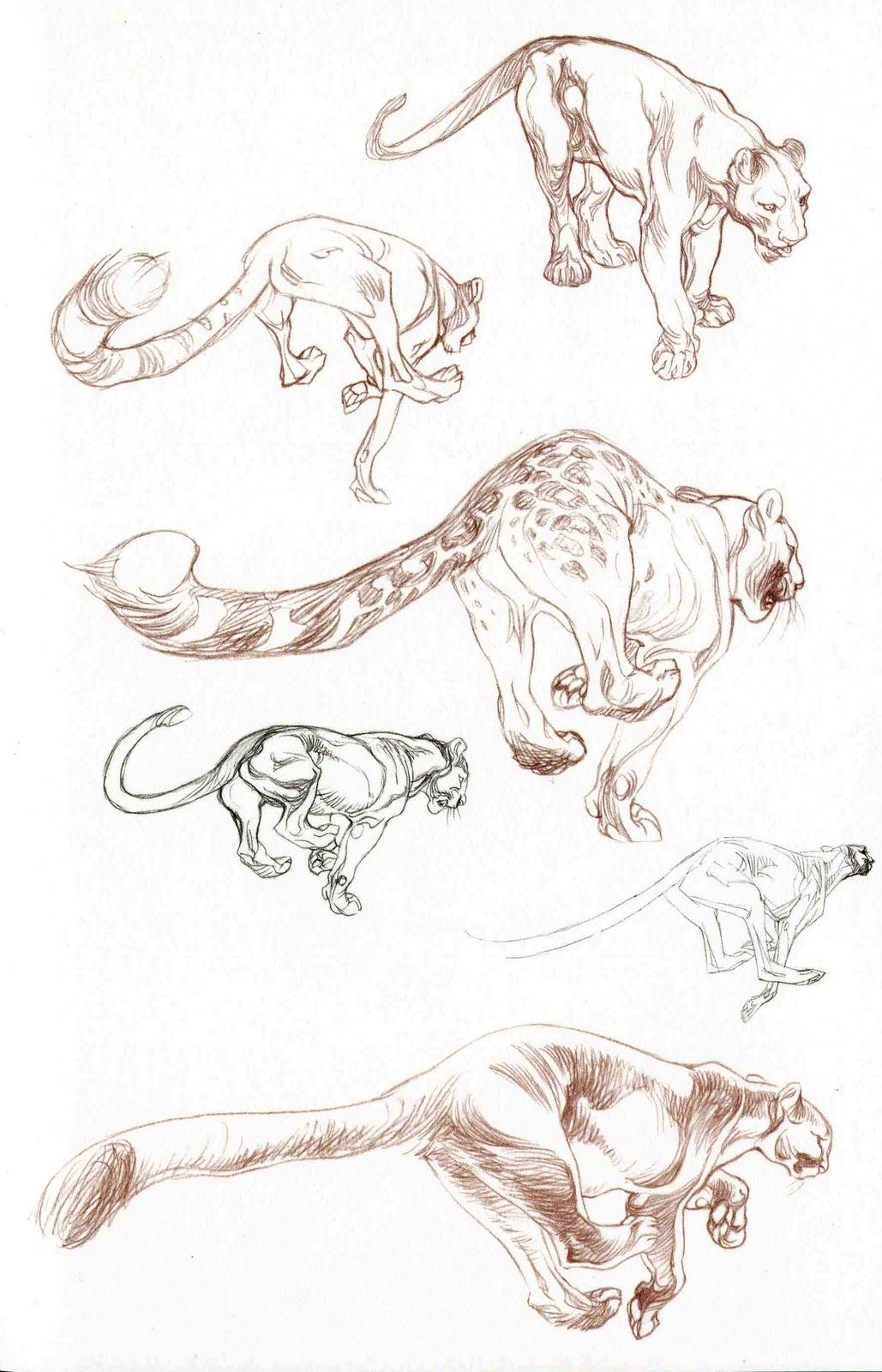 Academy Of Character Design : Academy of art character and creature design notes claire
