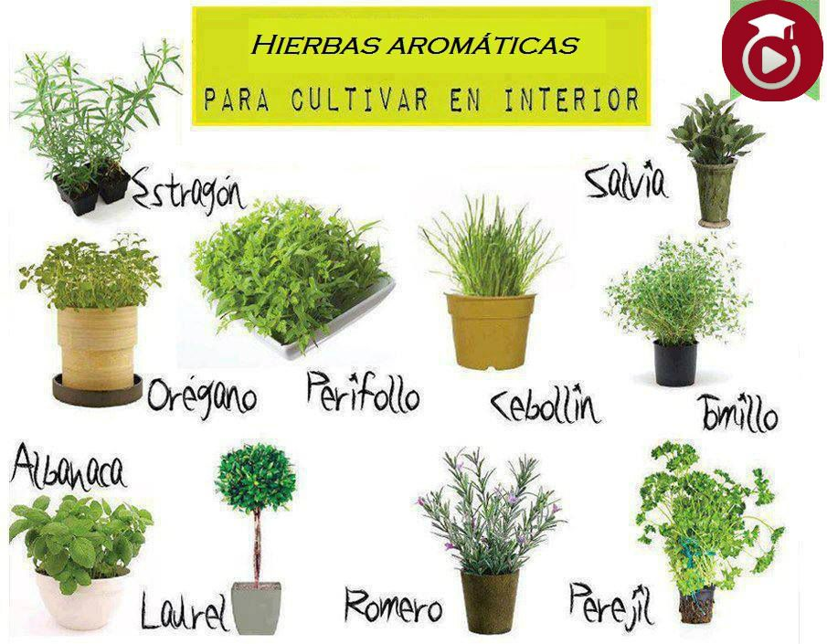 Plantas aromaticas pesquisa do google plantas - Clases de flores y sus nombres ...