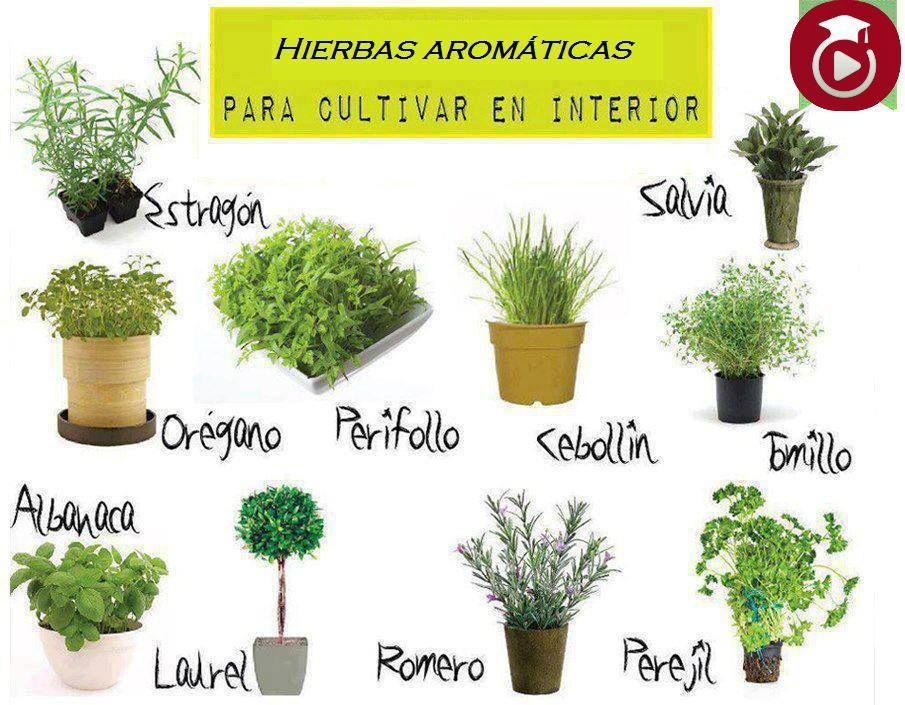 Plantas aromaticas pesquisa do google plantas for Plantas aromaticas jardin