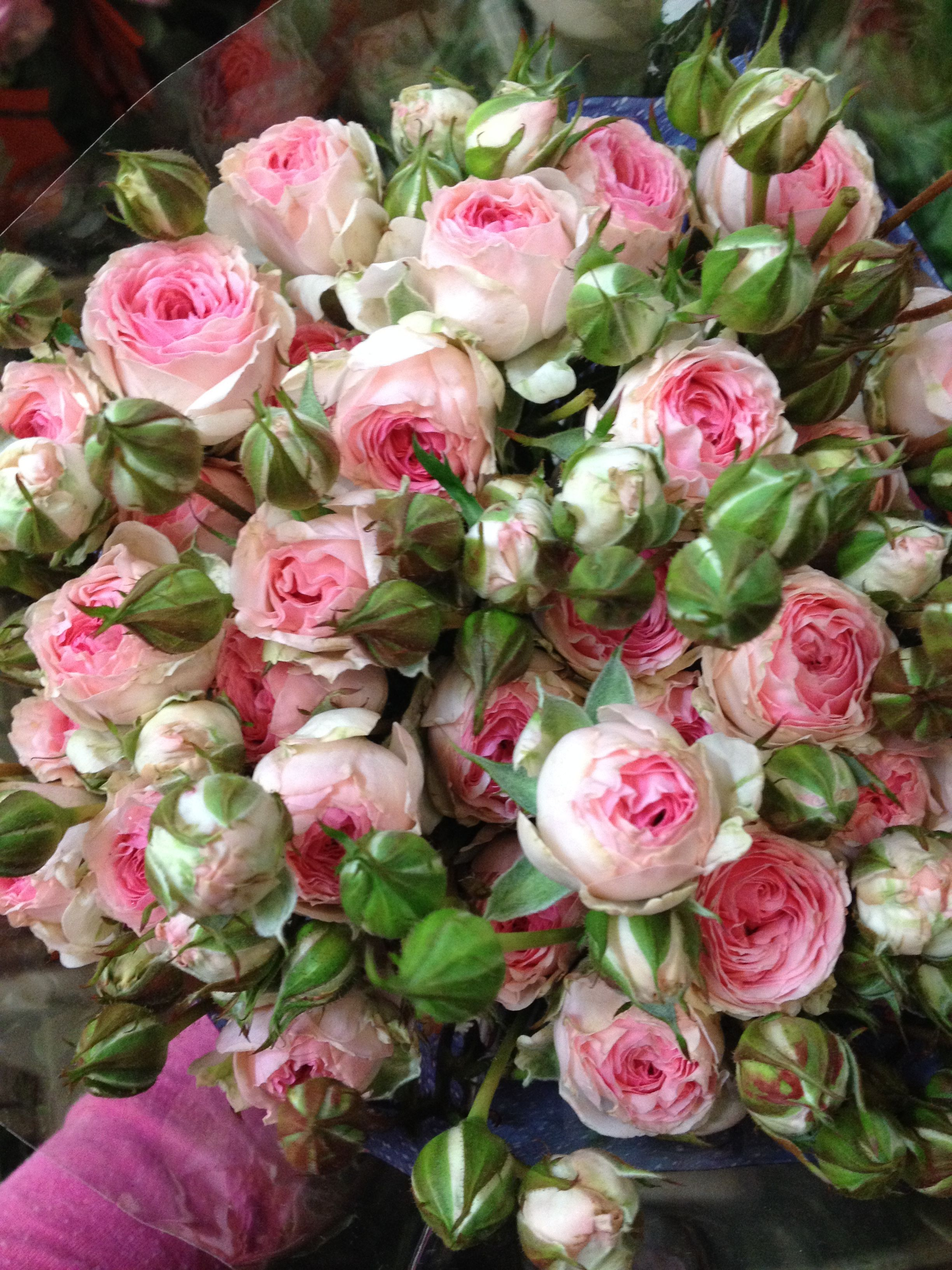 Home bulk roses peach roses - Spray Roses Called Kate Lynn These Are Large Sold In Bunches Of