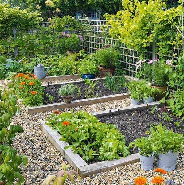 vegetable plots in a trellaced kitchen garden Home and Garden