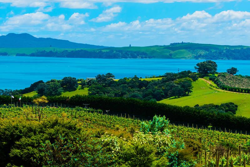 For wine enthusiasts, Auckland is the Napa Valley of the Southern Hemisphere.