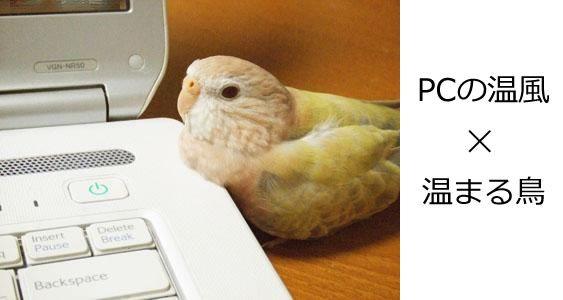 冬になるとインコがノートパソコンの温風吹き出し口に温まりにやってくると話題に  (via http://attrip.jp/139114/ )