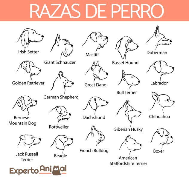 Razas De Perro Encuentra La De Tu Mascota Razas Perros Mascotas Expertoanimal Tatuajes De Mascotas Dibujos De Perros Tatuaje De Perro Boxer