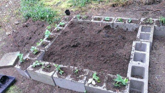 The Cheap Vegetable Gardener