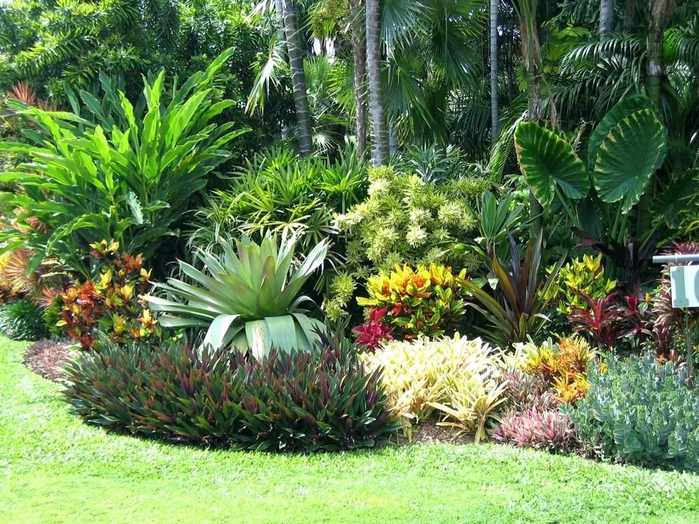 plant native to florida native plants and trees for your ...