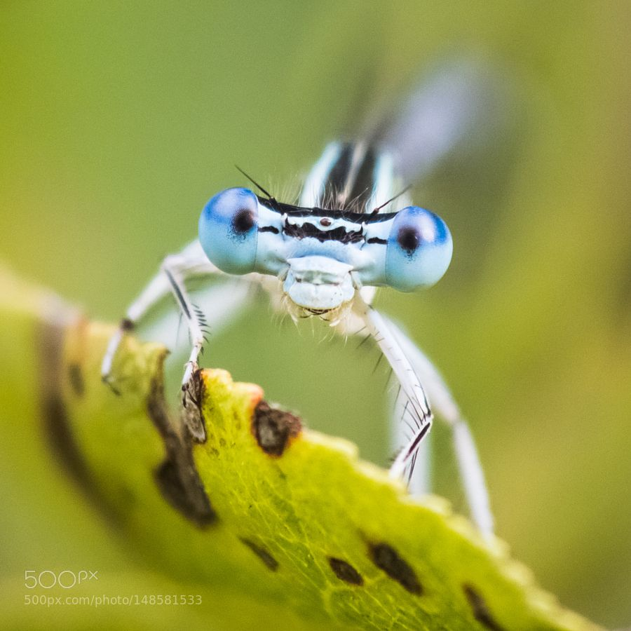 """""""Les yeux dans les yeux"""" by futoigokiburi"""