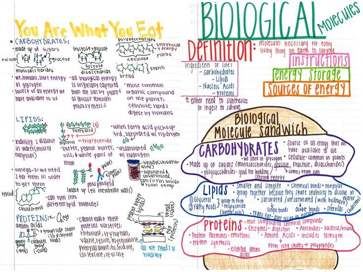 biology 1 notes This site serves as a resource site for students in biology 1 & 1a the goal of this course is to providee a general overview of major biological topics, provide opportunities for laboratory investigations, and expose students to current advances in biology and medicine most students taking biology.