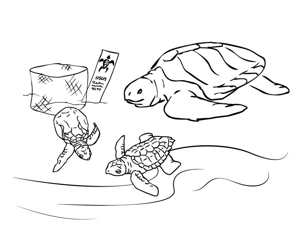 Free Printable Sea Turtle Coloring Pages For Kids Turtle Coloring Pages Animal Coloring Pages Coloring Pages Inspirational
