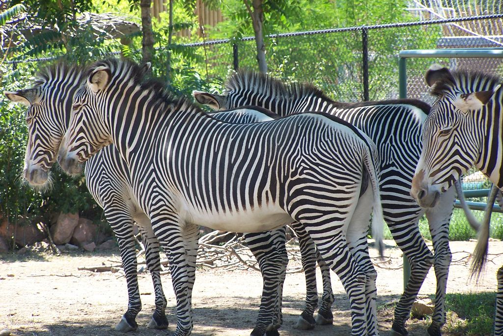 Image result for denver zoo zebra Free things to do