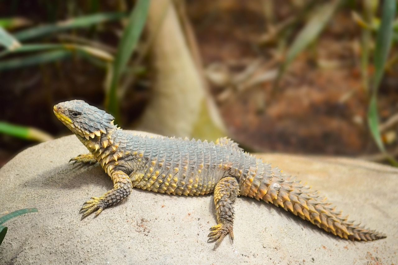 Protect Lizard Species from Endangerment – ForceChange | レプタイルズ