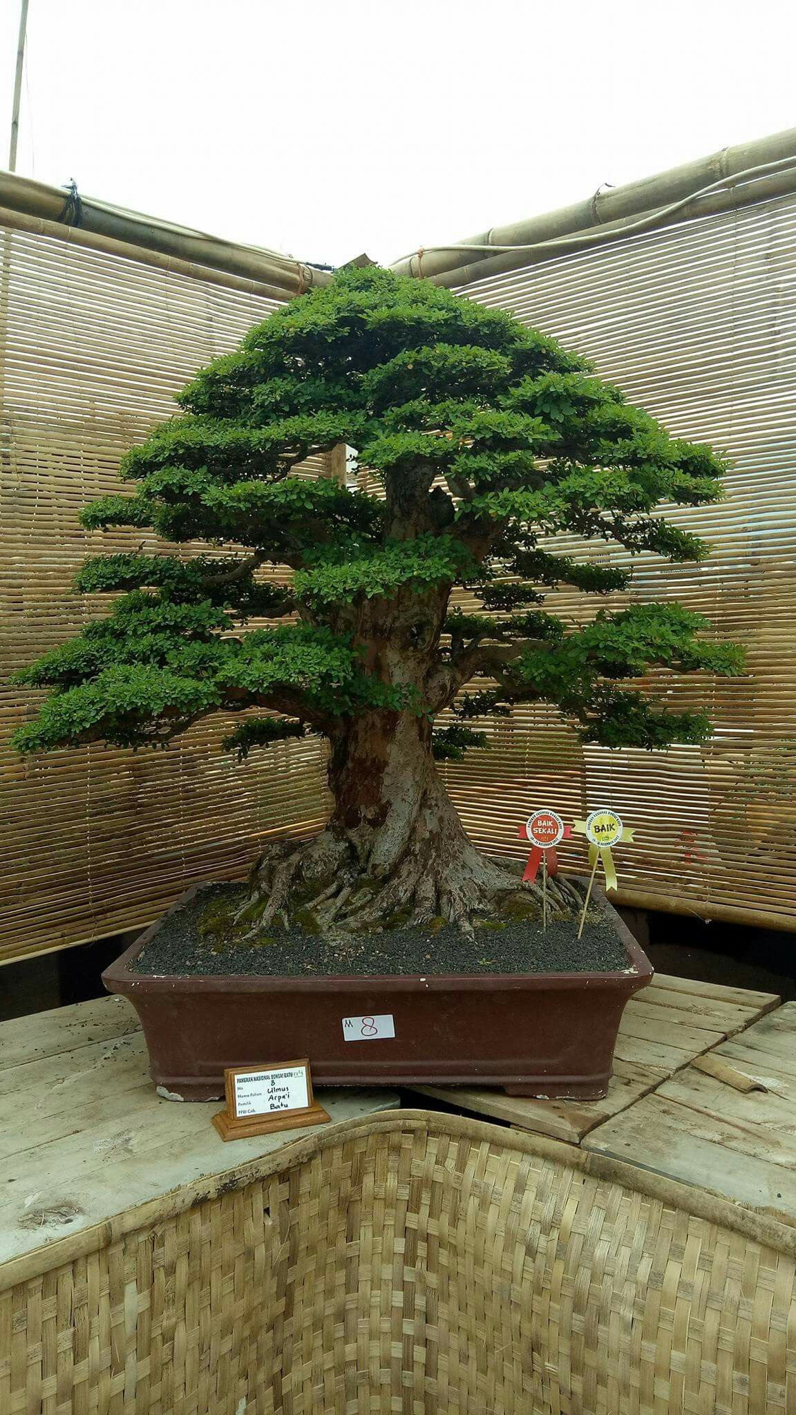 Pin by RAFAEL Leal on Bonsai | Pinterest | Bonsai, Gardens and ...