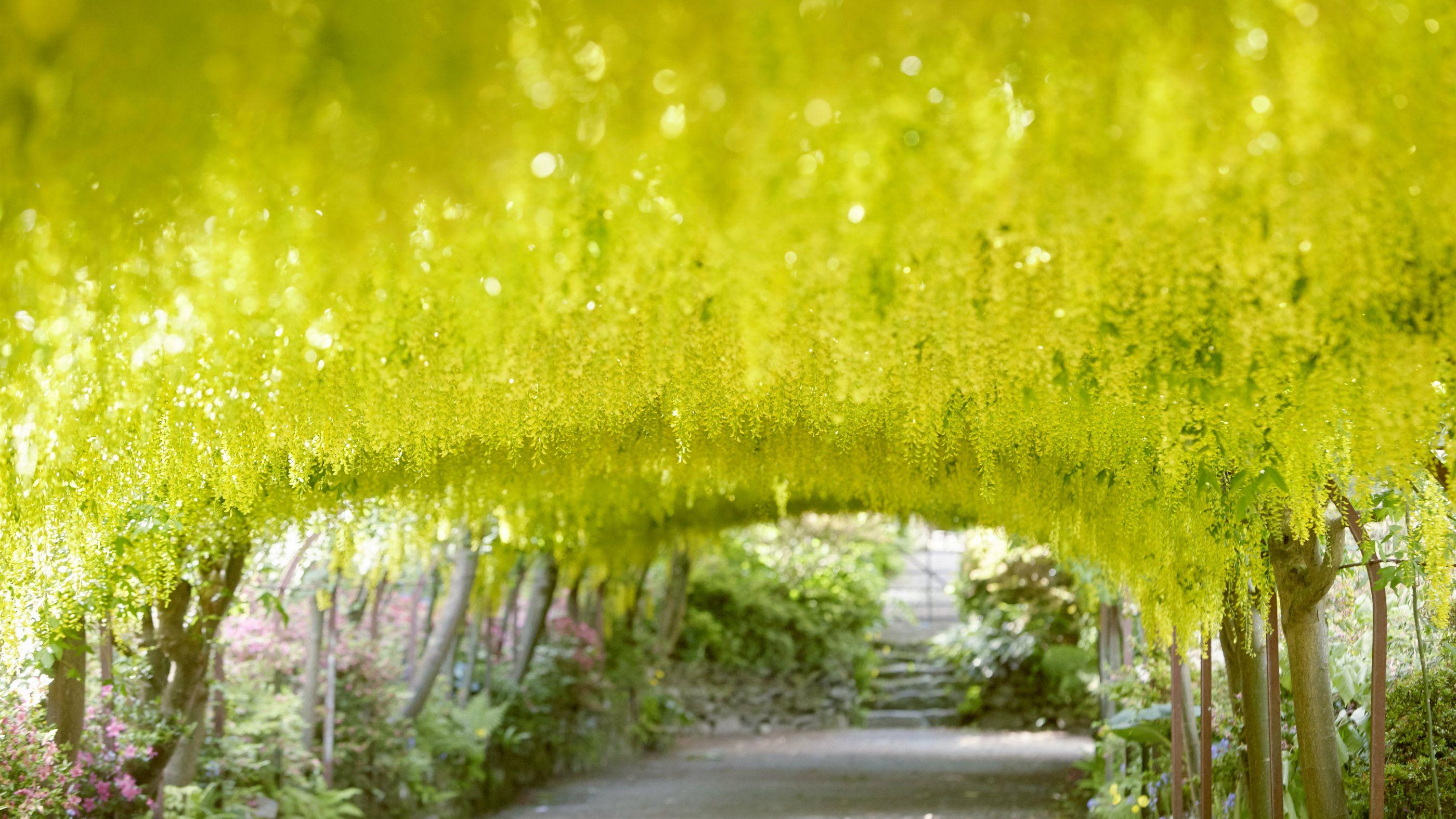 Visit the National Trust's Bodnant Garden, near Colwyn Bay, Wales