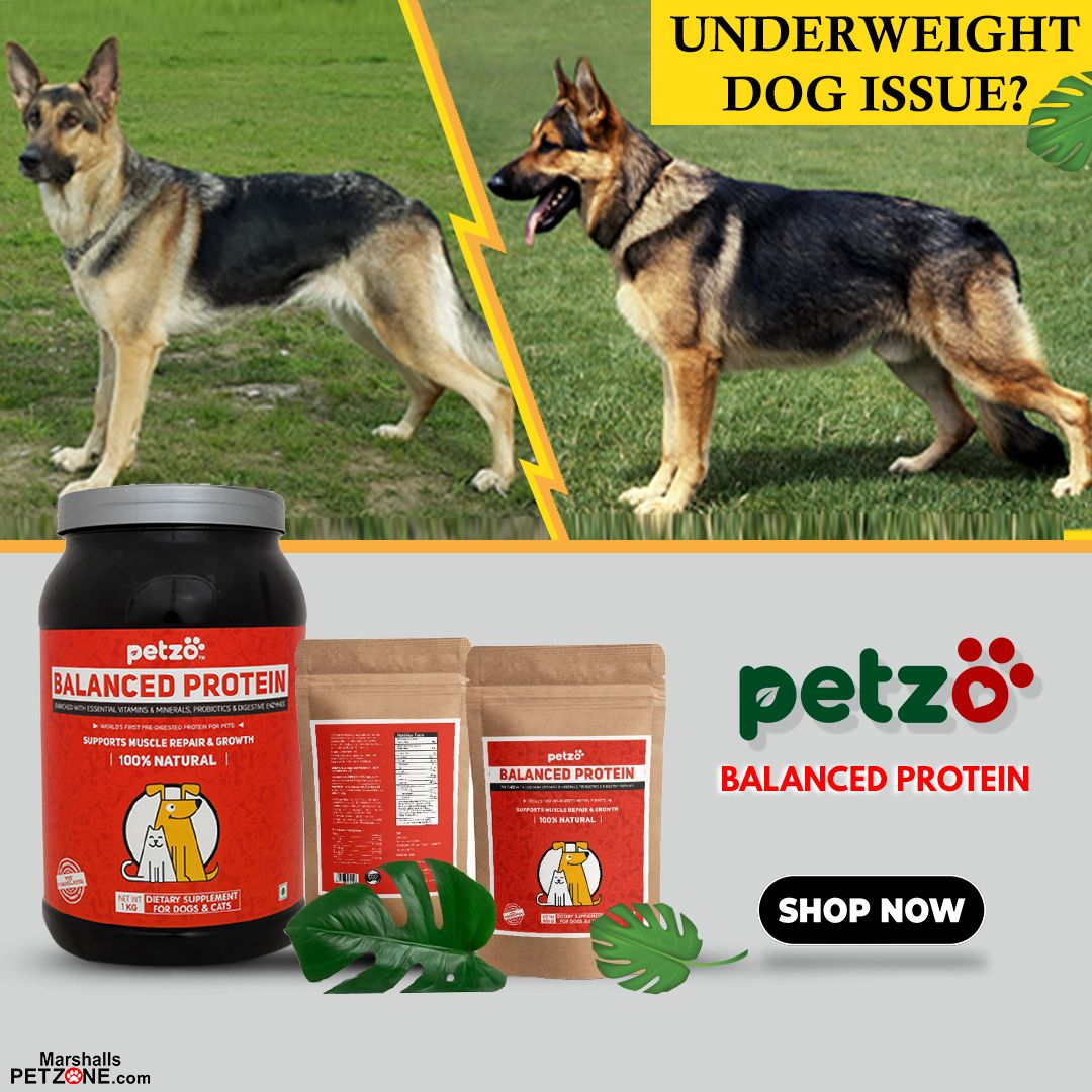 Petzo Balanced Protein For Dogs 500gms Best Dry Dog Food Dog