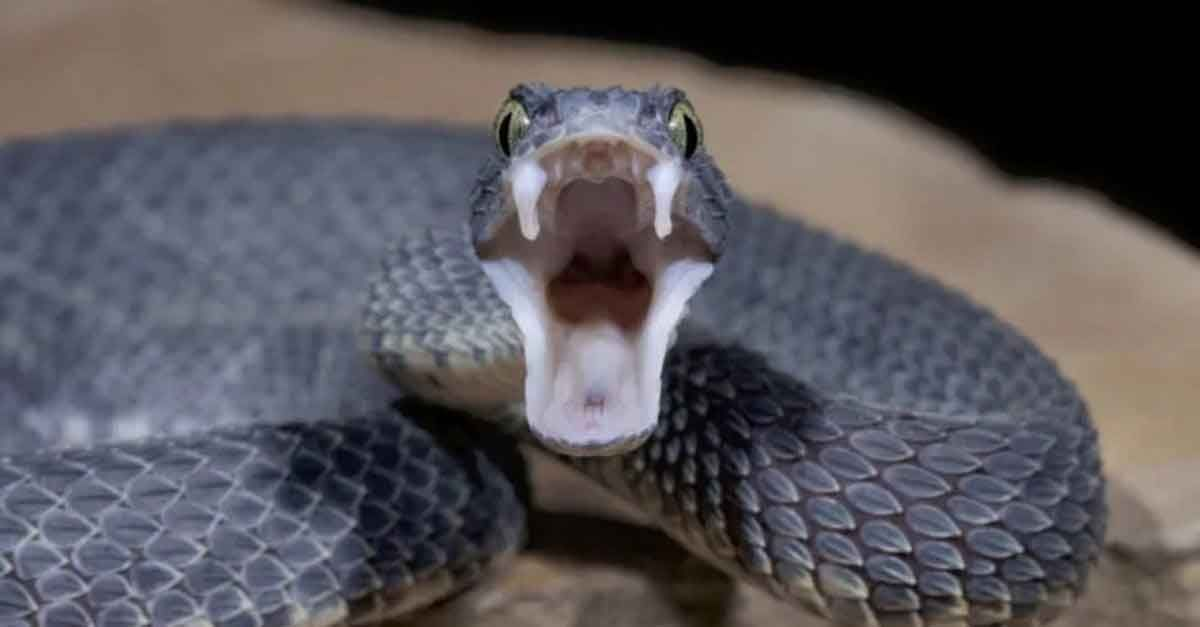 Ruyada 3 Yilan Gormek In 2021 Snake Snake Bites The Better Man Project