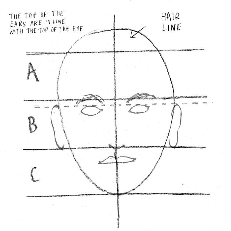 How to create a portrait.- Step 5 'Draw the eyes, just below line A. They are oval shaped. Note that they are almost in the centre of the head. (A common mistake is to draw the eyes much higher up). Now draw the ears. They start at the same level as the eyes and end on line B. Draw the bottom of the nose on line B. Draw the vertical groove between the nose and the top lip. It's called the Philtrum! and also draw the top lip.