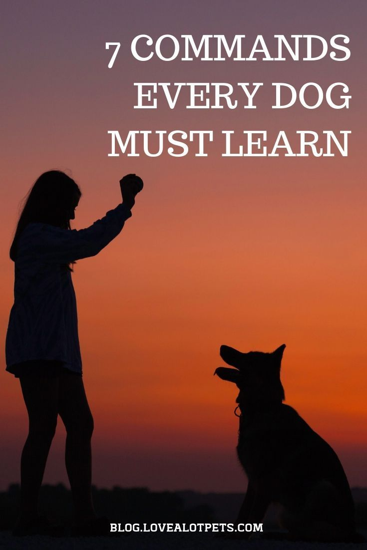 7 commands every dog must learn positive dog training