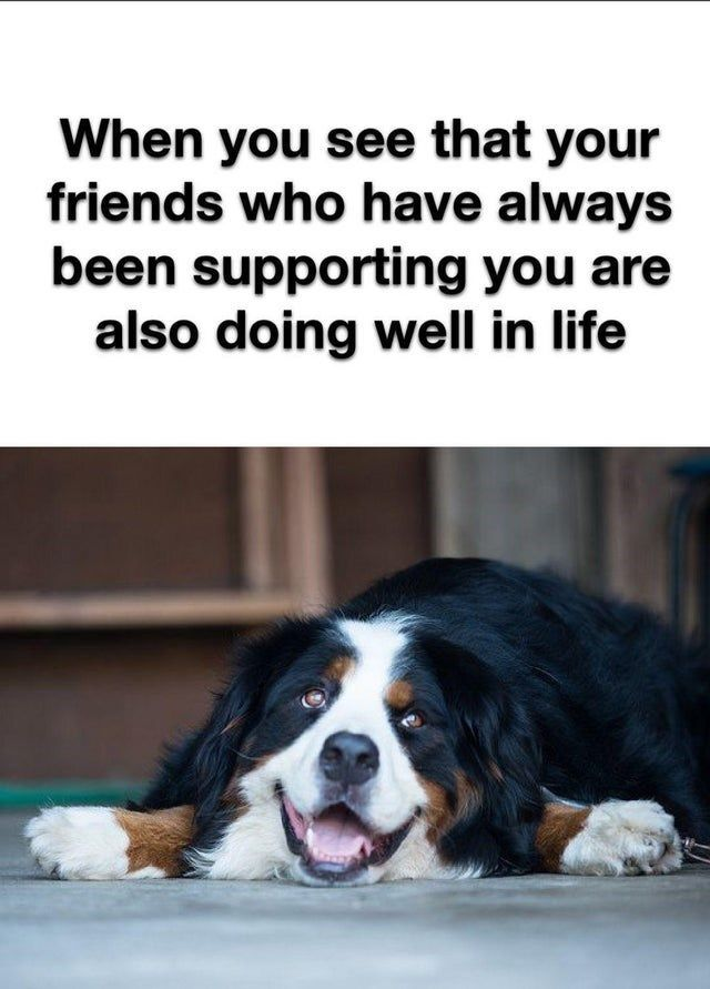 Good Vibes Only Wholesome Animal Memes October 5th 2020 Animal Memes Good Vibes Only Good Vibes