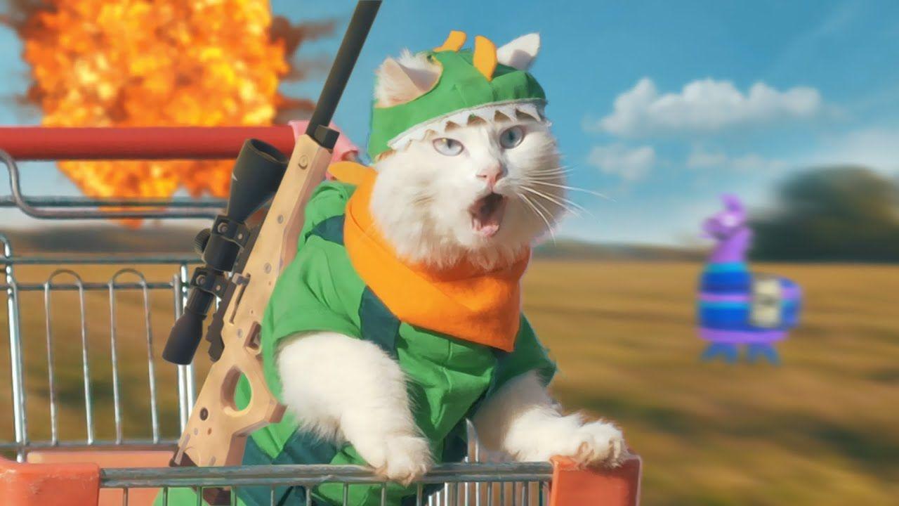 Cat Vs Fortnite In 2020 Cat Meeting Cats Super Mario Cat