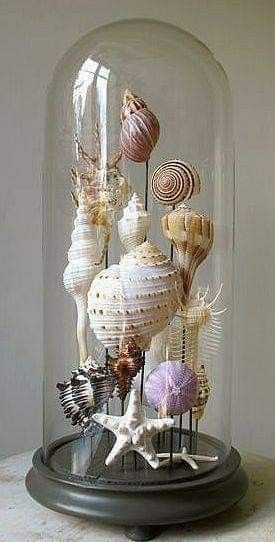 She Collects (Vintage) Seashells