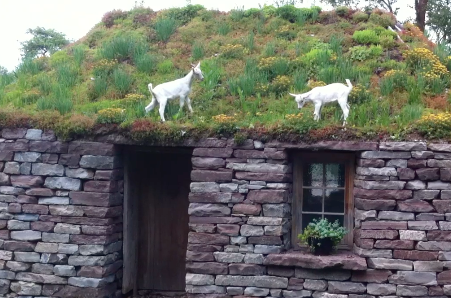 Cool Goat House Images Galleries With