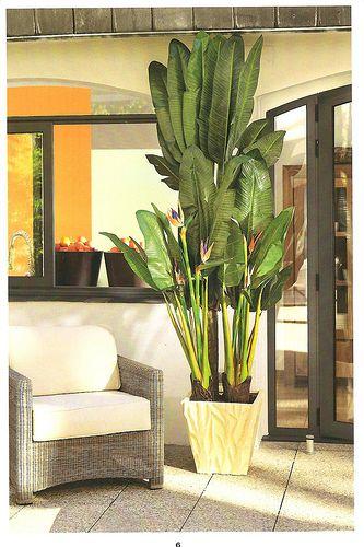 Palmera bali planta ave del paraiso flowers plants for Plantas decorativas de interior con poca luz