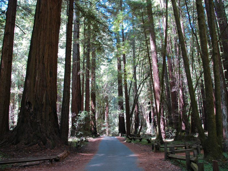 Not to miss -- hiking in the enchanted redwoods at Armstrong State Park in Guerneville.  Great place to go looking for fairies and elves!