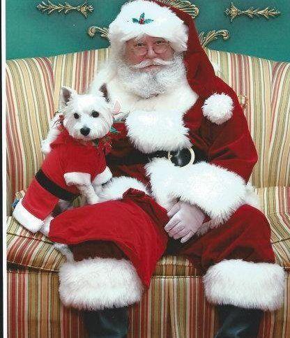 Westie And Santa Claus Christmas Dog Westie Dogs Christmas Animals
