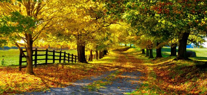Download Autumn themes for Windows 7 [Desktop Fun] Fall