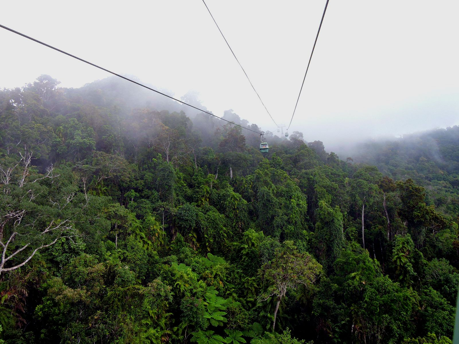 Life From Above, Skyrail Rainforest Cableway Nature Diary Discover Australian