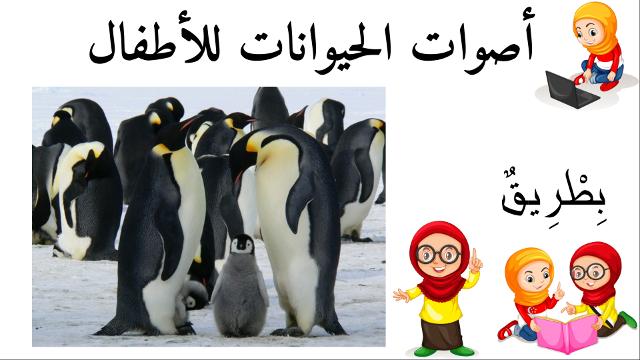 بطريق أسماء الحيوانات للأطفال وأصواتها Animals Penguins