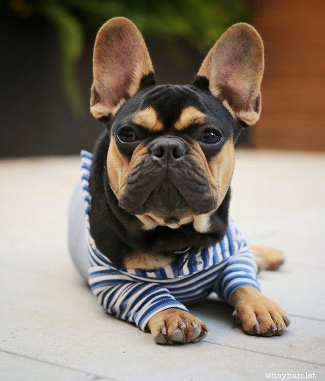 Pin By ɱaŋɖყ ɬaཞ ɛყ On Animals Galore Retriever Puppy