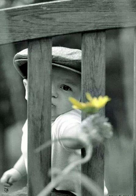 Black and white photography with a touch of color color splash offering little boy with flower so lovely