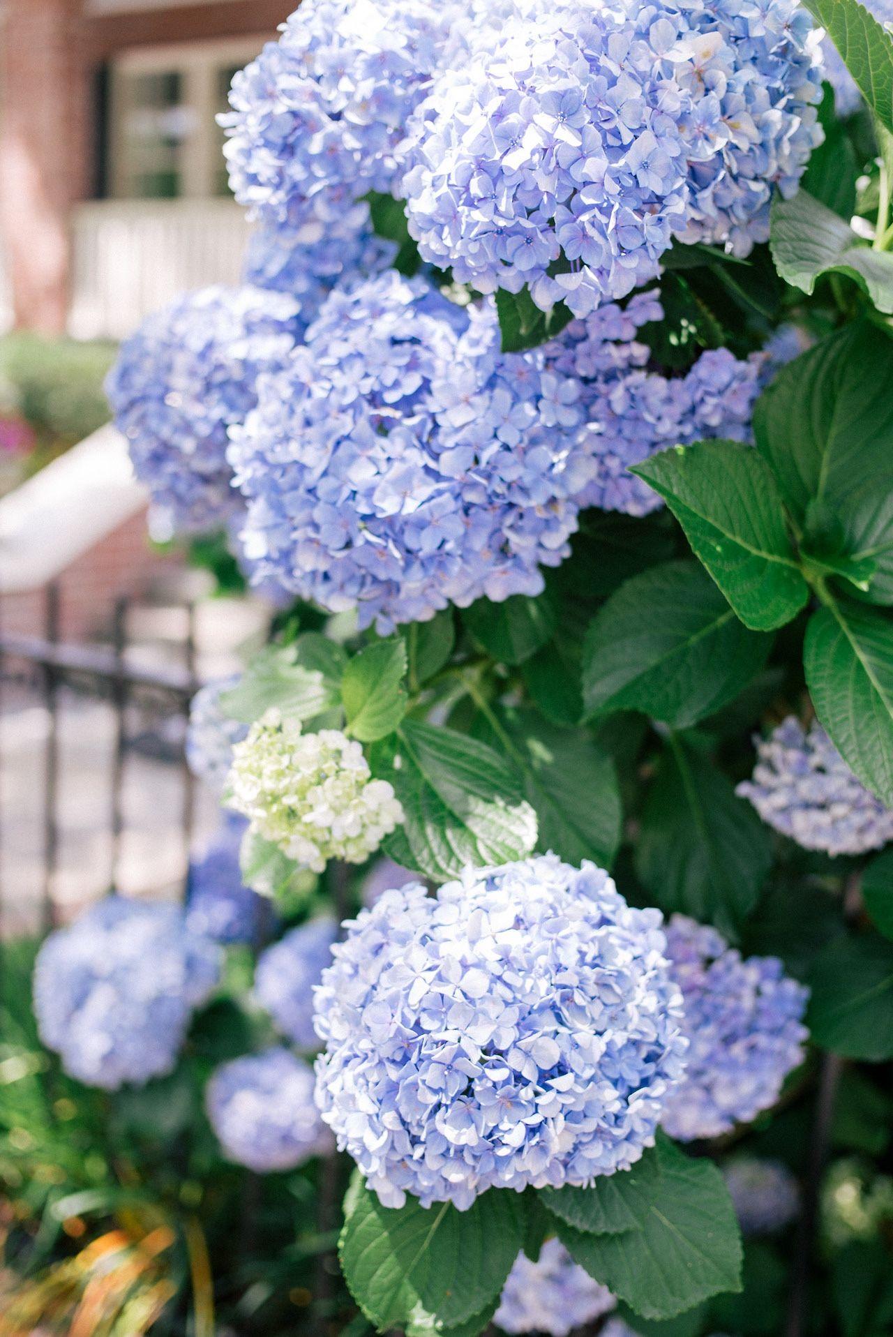 Pretty Blue Blue Tiful Pinterest Blue Things