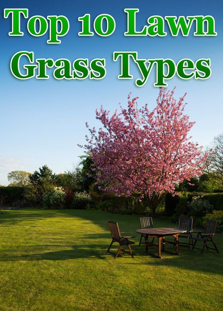 Top 10 Lawn Grass Types is part of lawn Space Grass - The biggest trick to having that perfect lawn is to pick the correct grass for your area  The most important factor to consider in selecting a lawn grass is its ability to survive the intended use of the yard  Most sites are a mix of conditions, so a suitable lawn grass would logically be a mix of lawn grass varieties