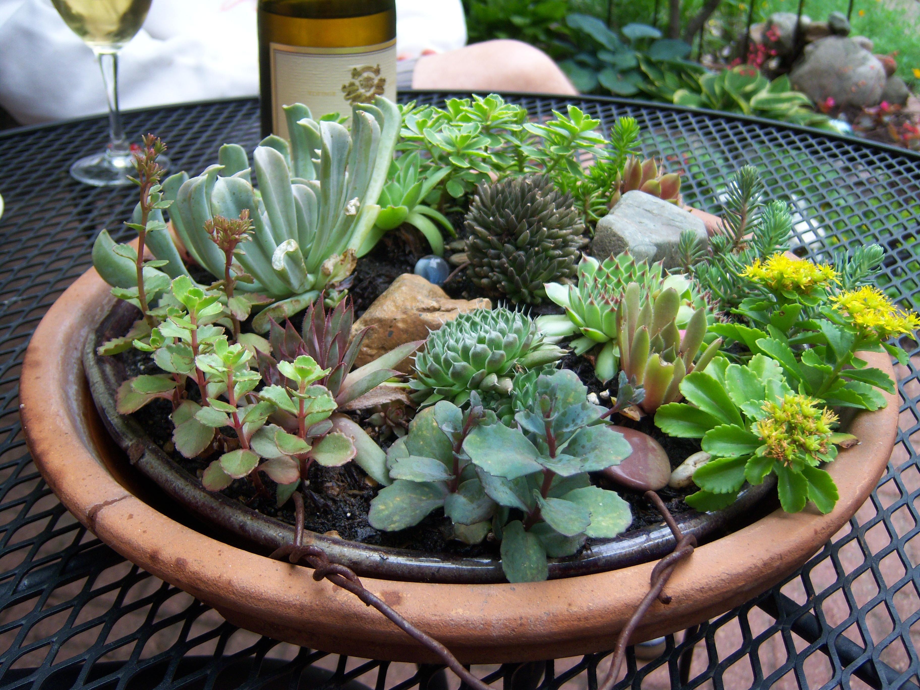 Lovely Succulent Dish Garden #Succulents